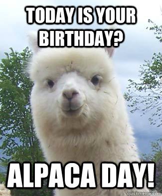 Today is your birthday? Alpaca day!  Alpaca-pun Alpaca