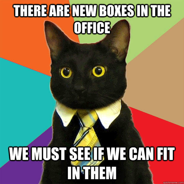 there are new boxes in the office we must see if we can fit in them  Business Cat