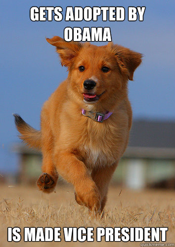 gets adopted by obama is made vice president - gets adopted by obama is made vice president  Ridiculously Photogenic Puppy