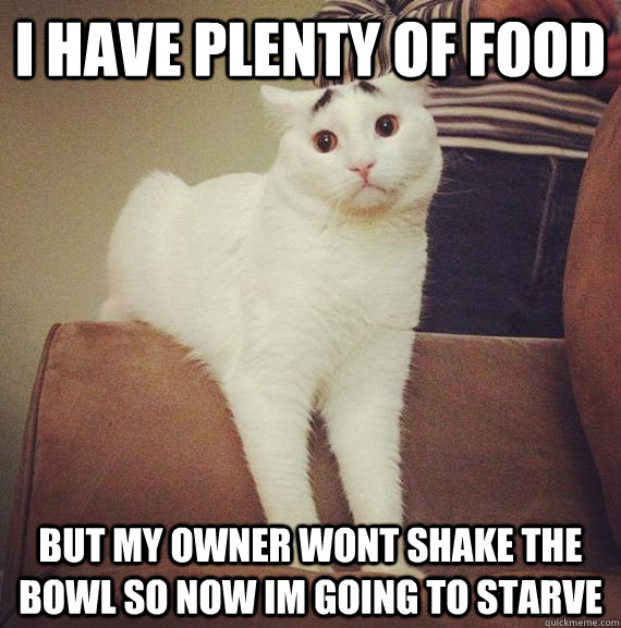 I HAVE PLENTY OF FOOD BUT MY OWNER WONT SHAKE THE BOWL SO NOW IM GOING TO STARVE