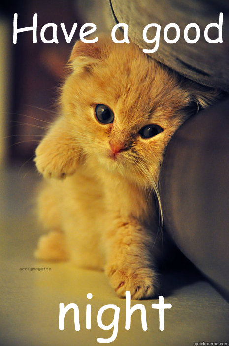 Have a good night - Have a good night Itty Bitty Ginger Kitty