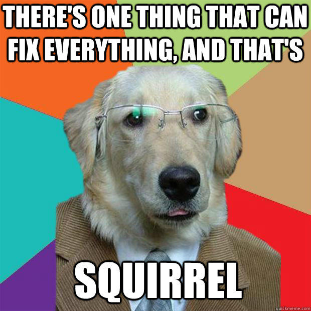 There's one thing that can fix everything, and that's Squirrel - There's one thing that can fix everything, and that's Squirrel  Business Dog