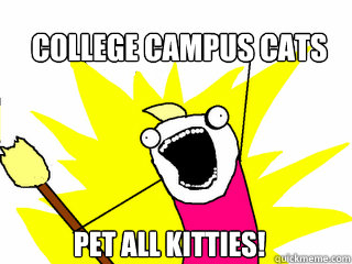 college campus cats pet all kitties! - college campus cats pet all kitties!  All The Things