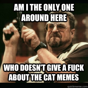 Am i the only one around here Who doesn't give a fuck about the cat memes - Am i the only one around here Who doesn't give a fuck about the cat memes  Misc