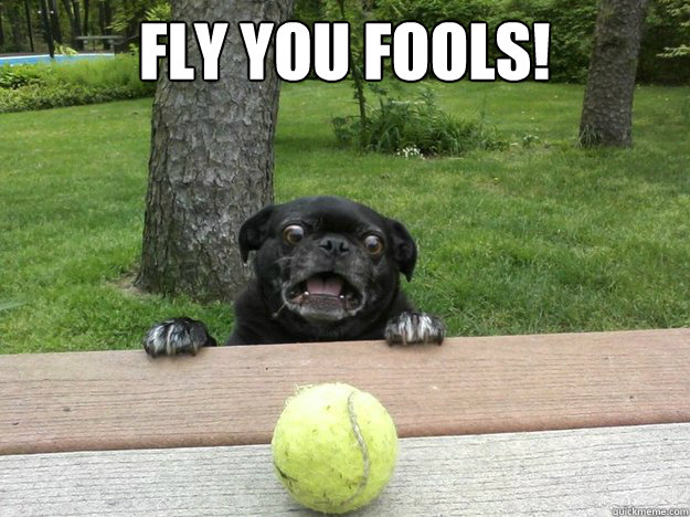 Fly you fools!  - Fly you fools!   Berks Dog
