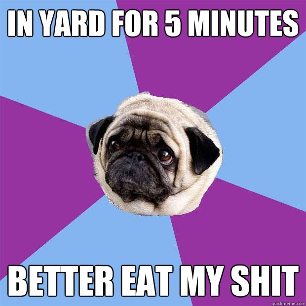 in yard for 5 minutes better eat my shit - in yard for 5 minutes better eat my shit  Lonely Pug