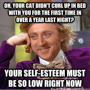 Oh, your cat didn't curl up in bed with you for the first time in over a year last night? Your self-esteem must be so low right now - Oh, your cat didn't curl up in bed with you for the first time in over a year last night? Your self-esteem must be so low right now  Condescending Wonka