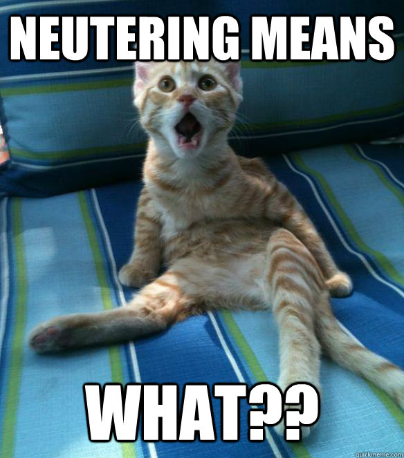 neutering means WHAT?? - neutering means WHAT??  Catastrophe Cat