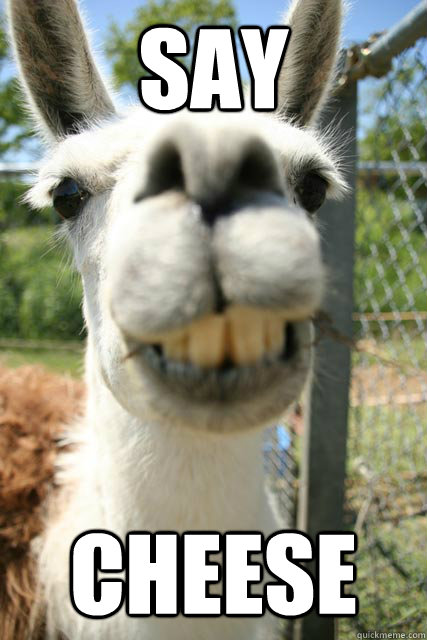 say cheese smile for the camera lama quickmeme