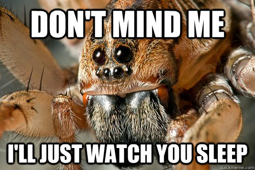 Don't mind me I'll just watch you sleep  creepy spider
