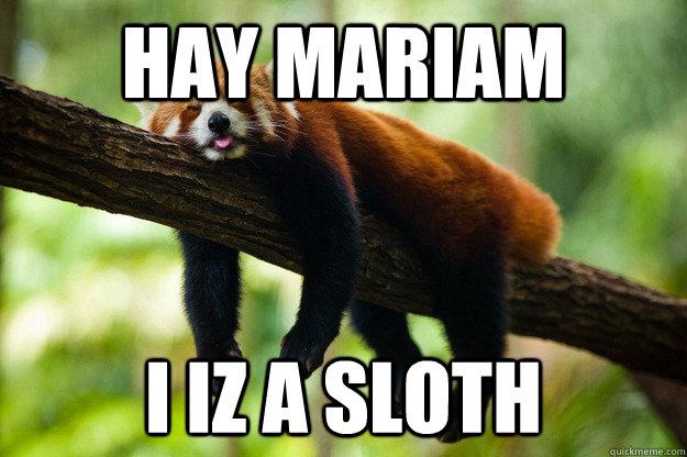 Hay Mariam I iz a sloth