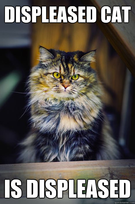 Displeased Cat is displeased - Displeased Cat is displeased  Displeased Cat