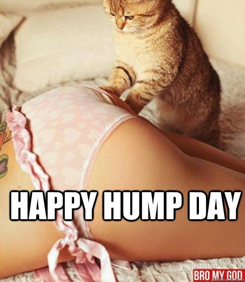 happy hump day  hump day