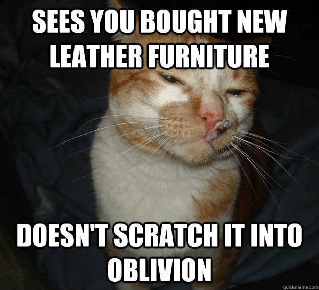 Sees you bought new leather furniture Doesn't scratch it into oblivion  - Sees you bought new leather furniture Doesn't scratch it into oblivion   Good Guy Cat