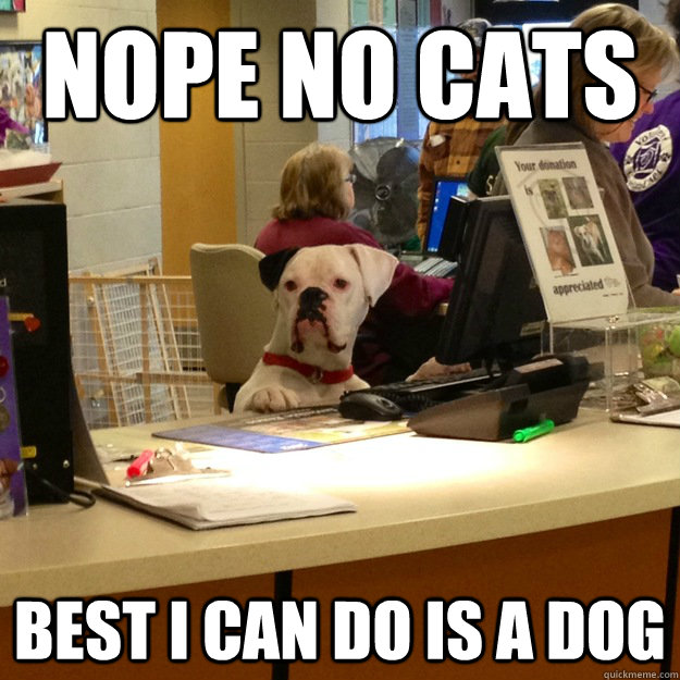 NOPE NO CATS BEST i CAN DO IS A DOG