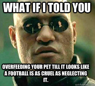 what if i told you overfeeding your pet till it looks like a football is as cruel as neglecting it.  Matrix Morpheus
