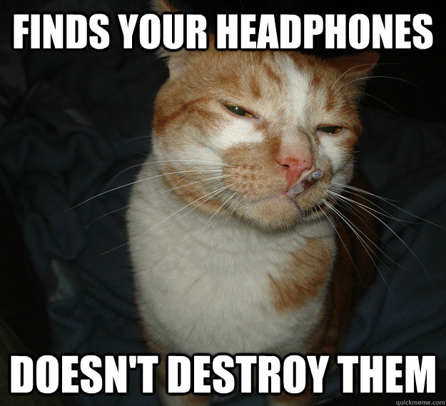 Finds your headphones Doesn't destroy them - Finds your headphones Doesn't destroy them  Good Guy Cat