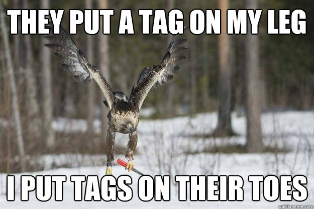 They put a tag on my leg I put tags on their toes - They put a tag on my leg I put tags on their toes  Revenge eagle