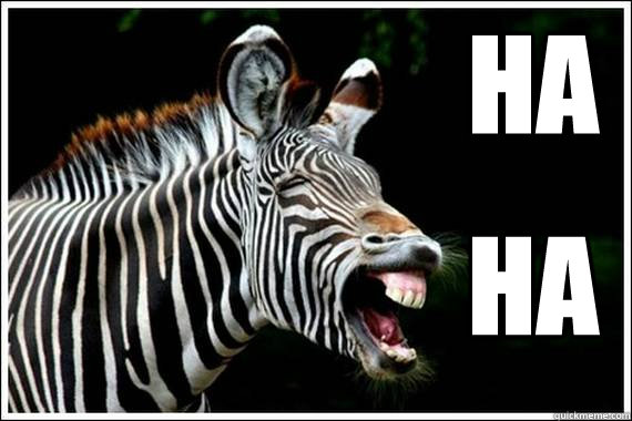 Funny Zebra Meme : Easily amused zebra memes quickmeme
