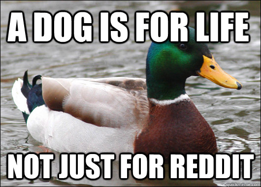 A DOG IS FOR LIFE NOT JUST FOR REDDIT - A DOG IS FOR LIFE NOT JUST FOR REDDIT  Actual Advice Mallard
