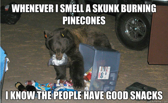 whenever i smell a skunk burning pinecones i know the people have good snacks - whenever i smell a skunk burning pinecones i know the people have good snacks  Food Snob Bear