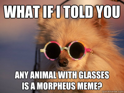 What if I told you  Any animal with glasses is a morpheus meme?
