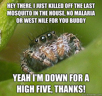 hey there, I just killed off the last mosquito in the house, no malaria or west nile for you buddy yeah I'm down for a high five, thanks! - hey there, I just killed off the last mosquito in the house, no malaria or west nile for you buddy yeah I'm down for a high five, thanks!  Misunderstood Spider