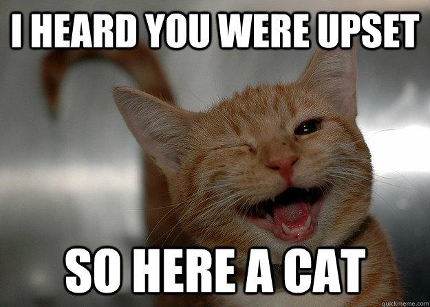 i heard you were upset so here a cat