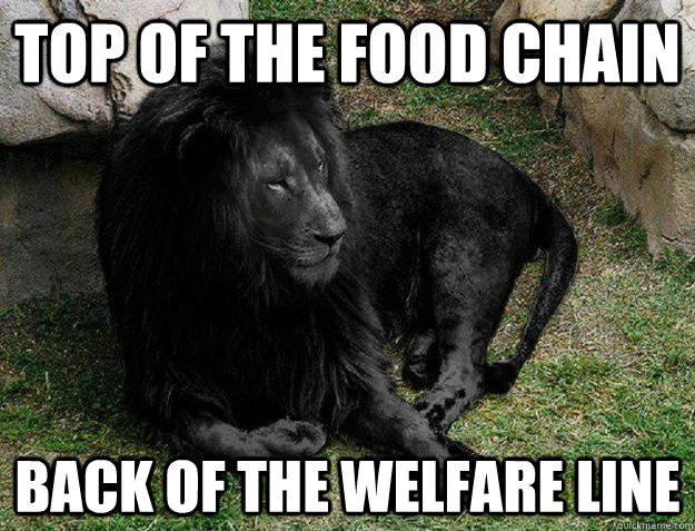 Top of the food chain back of the welfare line - Top of the food chain back of the welfare line  Black Lion Problems