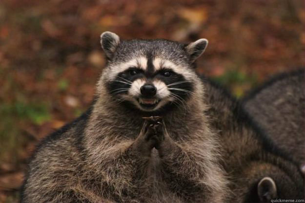 -    Evil Plotting Raccoon