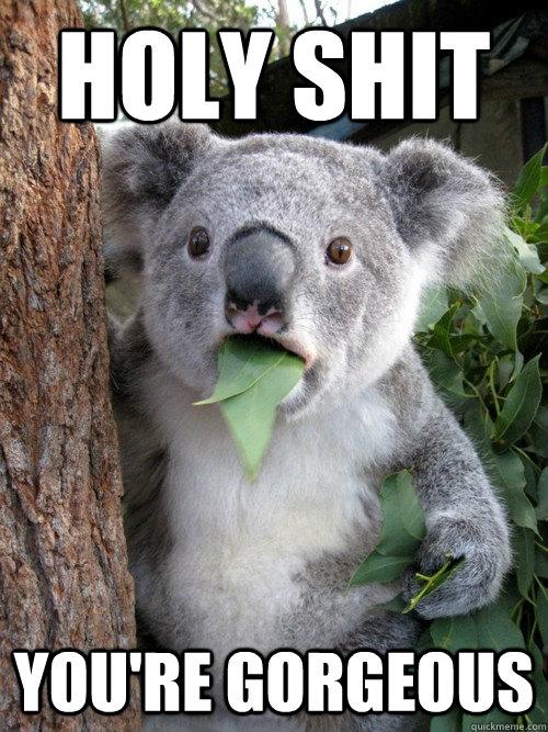 holy shit youre gorgeous surprised koala quickmeme