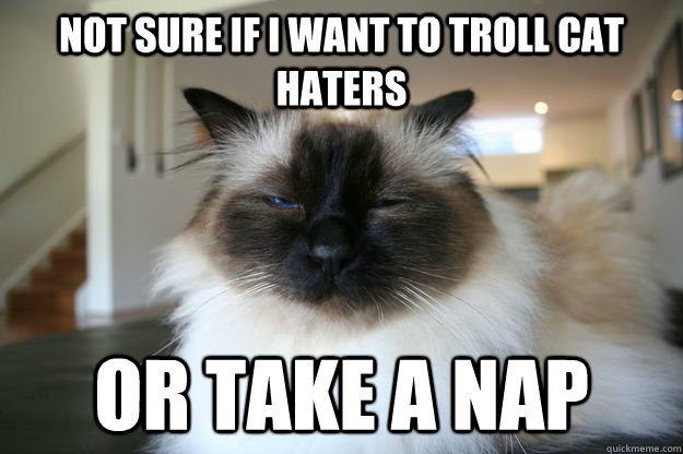 not sure if I want to troll cat haters or take a nap