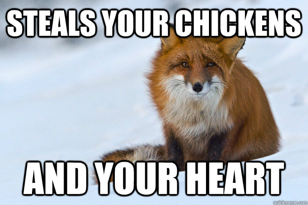 Steals your chickens and your heart - Steals your chickens and your heart  Ridiculously Photogenic Fox