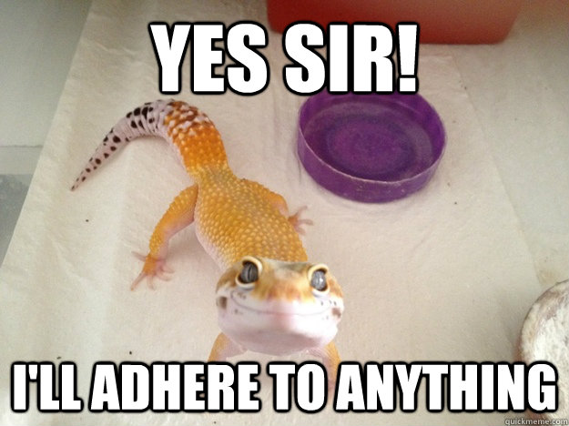 yes sir! I'll adhere to anything - yes sir! I'll adhere to anything  Ridiculously Photogenic Gecko