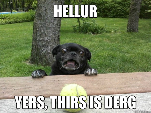 Hellur Yers, thirs is derg - Hellur Yers, thirs is derg  Berks Dog