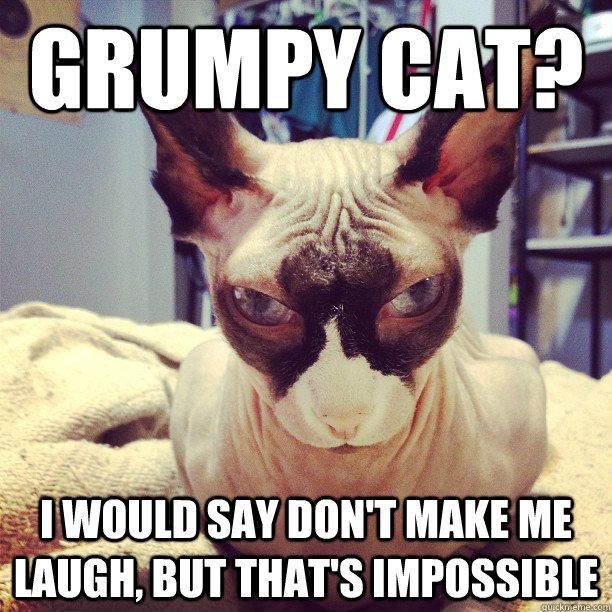 725e1a9db931eb1160e2b72fe10cef831cc66a747918133d9163bb18b54e6d85 grumpy cat? i would say don't make me laugh, but that's impossible