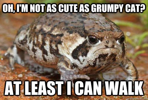 Oh, I'm not as cute as grumpy cat? at least i can walk