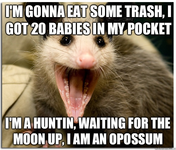 I'm gonna eat some trash, I got 20 babies in my pocket I'm a huntin, waiting for the moon up, I am an opossum