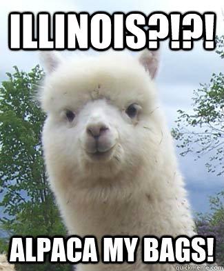 Illinois?!?! Alpaca my bags!  Alpaca-pun Alpaca