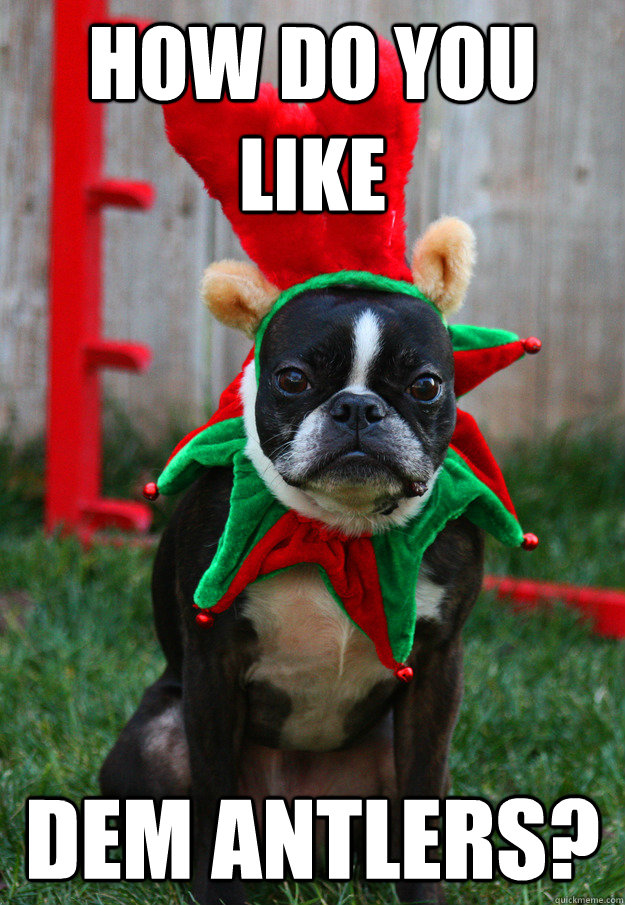 How do you like dem antlers?  grumpy holiday dog