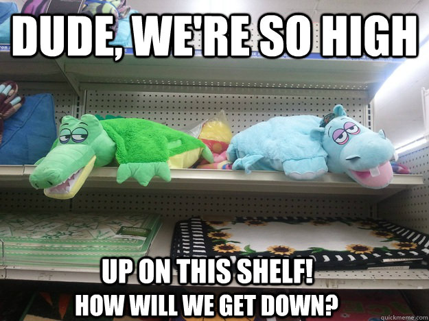 Dude, we're so high up on this shelf! how will we get down?