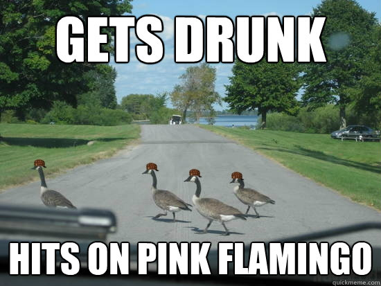 Gets drunk hits on pink flamingo  Scumbag Geese