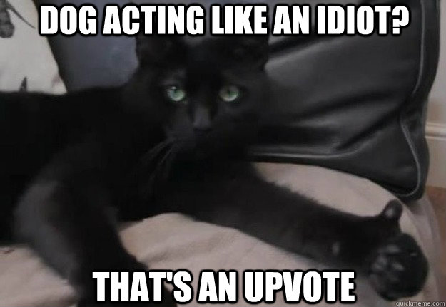 Dog acting like an idiot? That's an upvote
