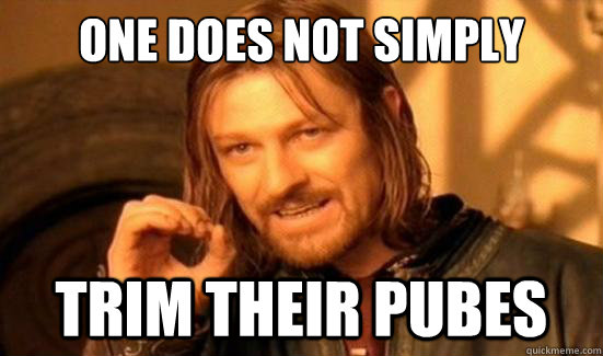 One Does Not Simply trim their pubes - One Does Not Simply trim their pubes  Boromir