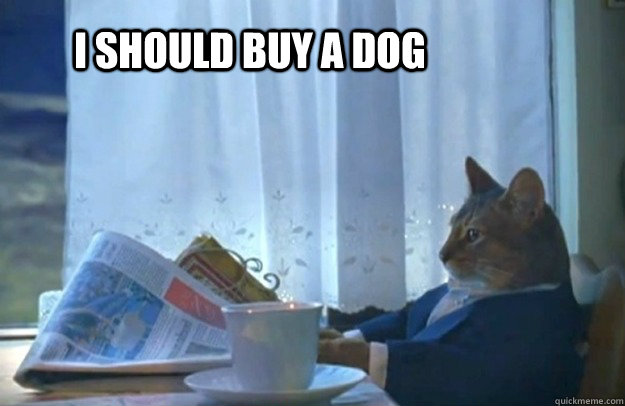 I should buy a dog - I should buy a dog  Sophisticated Cat