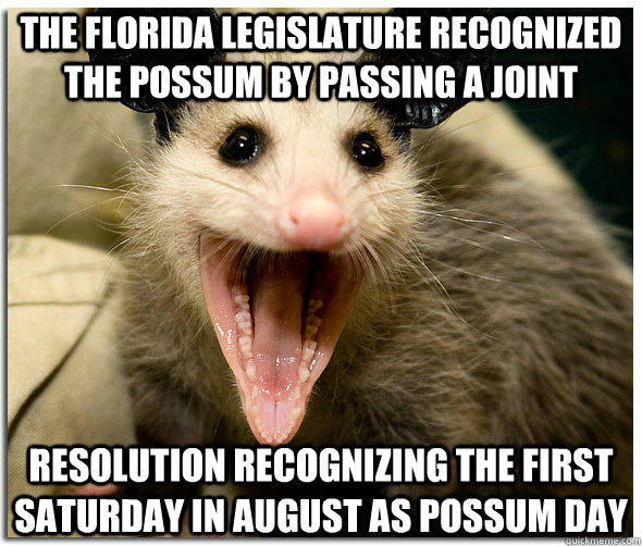 the florida legislature recognized the possum by passing a joint resolution recognizing the first saturday in august as possum day  Over-Excited Possum