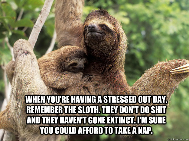 Meme Don T Stress Funny : When you're having a stressed out day remember the sloth. they don