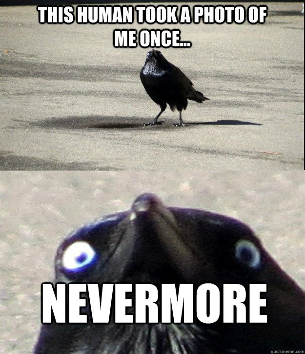 This human took a photo of me once... NEVERMORE - This human took a photo of me once... NEVERMORE  Misc
