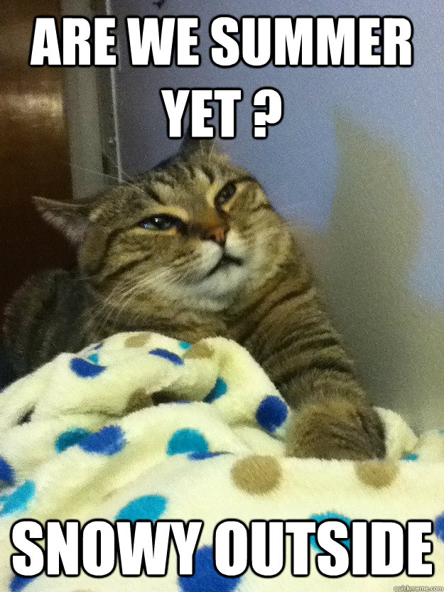 That's it i'm done with catnip - Hangover Cat - quickmeme