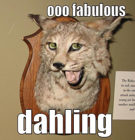 quim cat -                 OOO FABULOUS DAHLING Misc